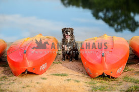 dog on beach between canoes