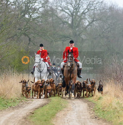 Huntsman and hounds in Grimsthorpe Park 5/2