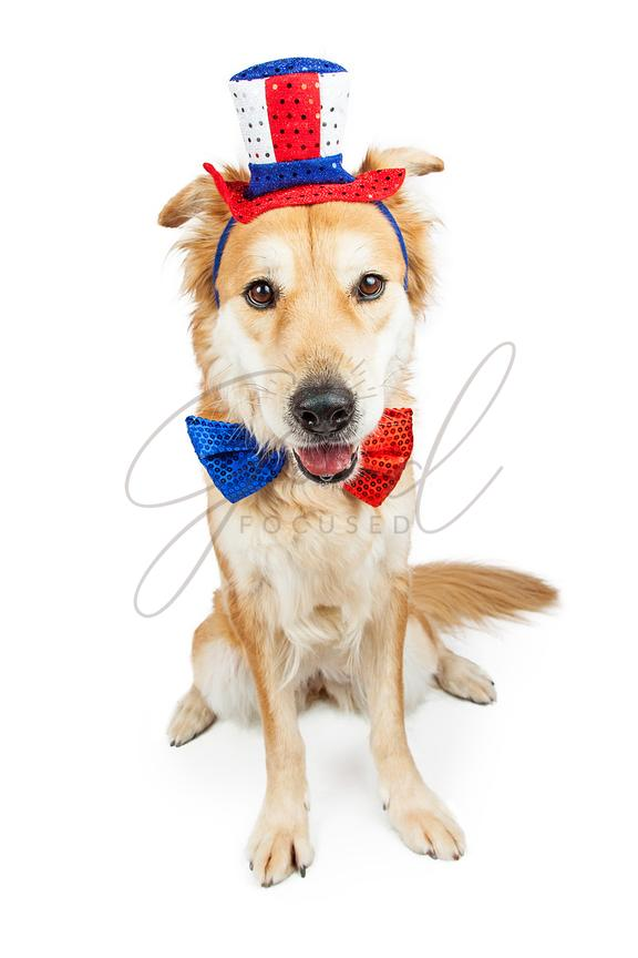 Independence Day Large Cute Crossbreed Dog