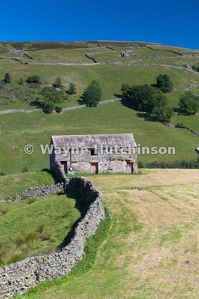 Traditional field barn in a newly cropped meadow at the top of Swaledale, with Kisdon Hill behind.