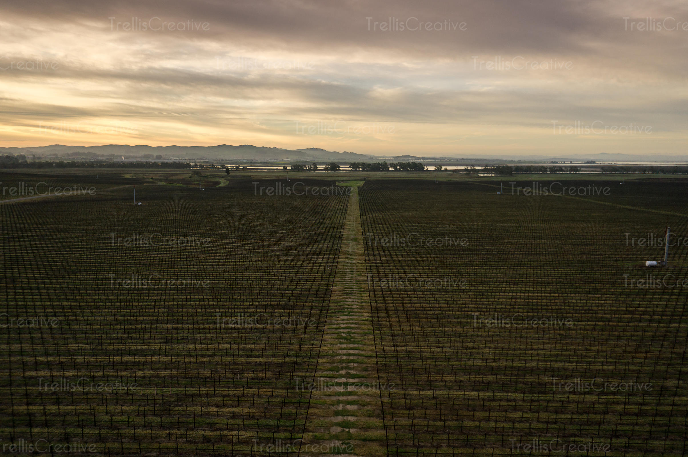 Aerial photography of Napa Valley vineyard in winter