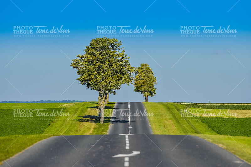 Asphalt road lined with fields and trees in Champagne France
