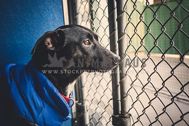 Dog at shelter looking out of cage