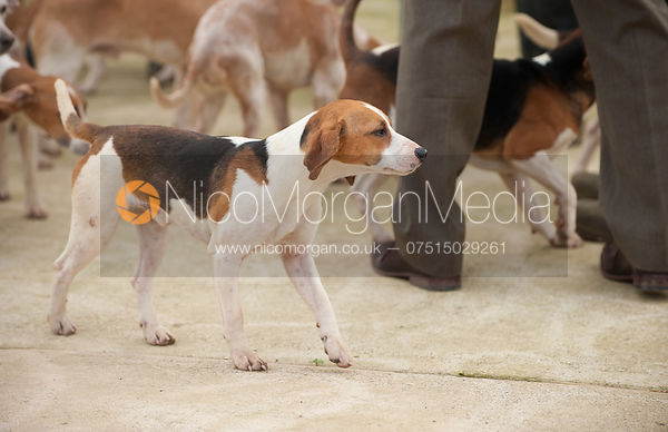 The meet at the Cottesmore Kennels