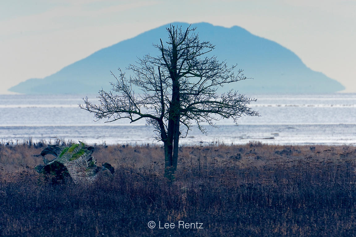Bare Tree and Mountain Viewed across Boundary Bay