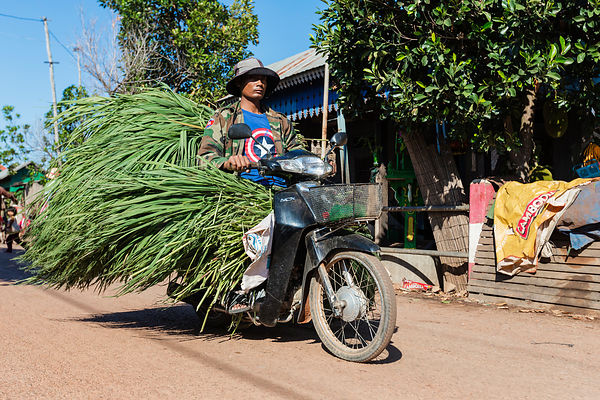 Man Carrying a Load of Grass on a Motorcycle