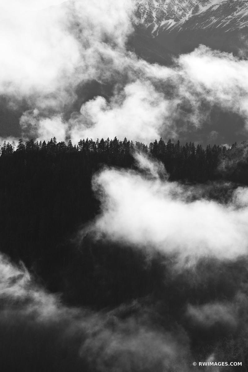 MOUNTAIN FOREST HURRICANE RIDGE ROAD OLYMPIC NATIONAL PARK WASHINGTON BLACK AND WHITE VERTICAL