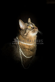 Glamour shot of a cat wearing pearls