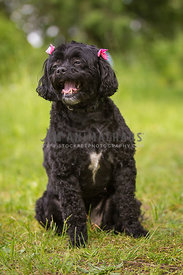 Happy young black dog in grass