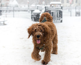 CircleSnowDogs-20150305-013