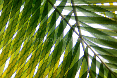 tropical_colors_07