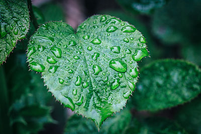 Water_droplets_on_a_leaf_Wicklow-