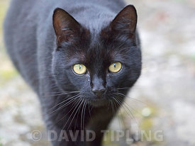 Domestic cat Norfolk summer