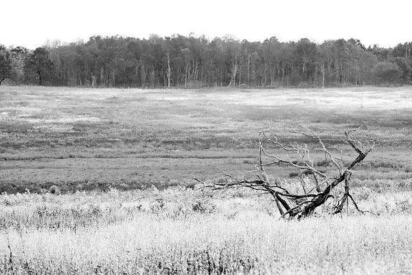 BIG MEADOWS SHENANDOAH NATIONAL PARK VIRGINIA BLACK AND WHITE