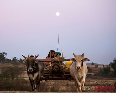 Bullock cart with local people under a full moon, Myanmar