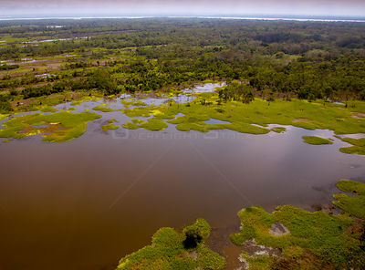 Aerial view of the Amazon River flood plain, near Iquitos, Peru. July 2015.