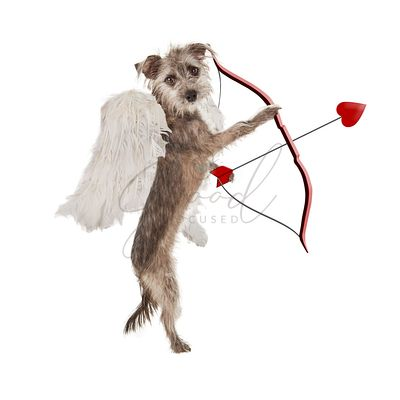 Valentines Day Cupid Dog