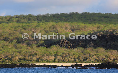 Darwin Beach, Genovesa, just after sunrise, Galapagos Islands