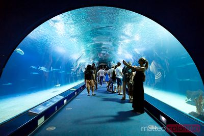 Inside the aquarium, City of Arts and Sciences, Valencia, Spain