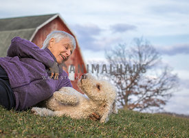 happy older woman playing with young golden doodle dog in front of red barn