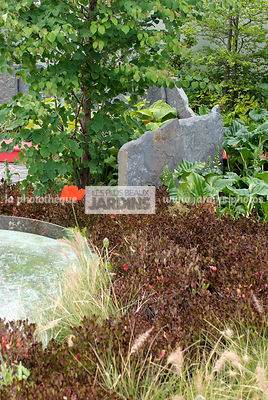 Bush, Contemporary garden, Crimson, Evergreen, Purple, Stone, Digital