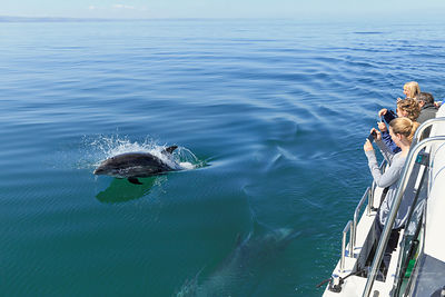 Dolphin watching boat trip, Cardigan Bay