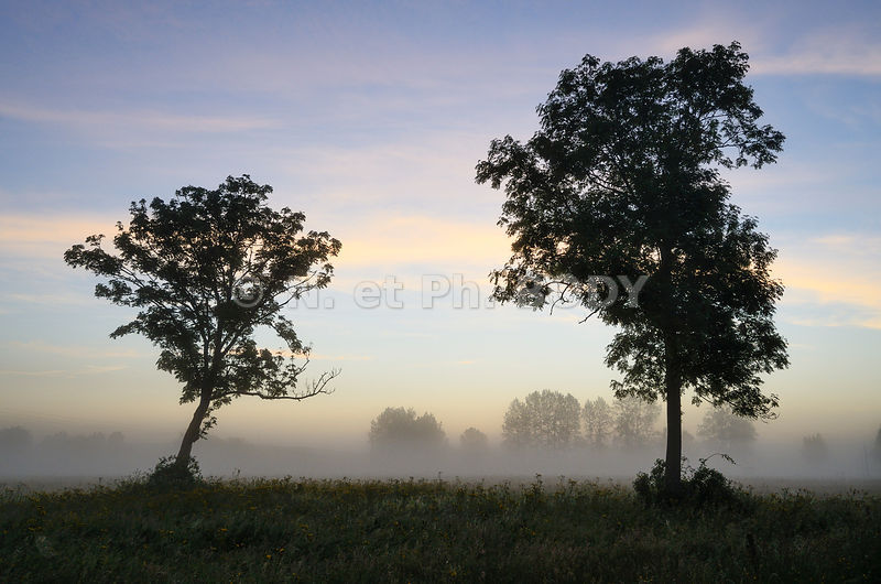 FRANCE, MANCHE, LE BOCAGE//France, Normandy, Manche, Bocage