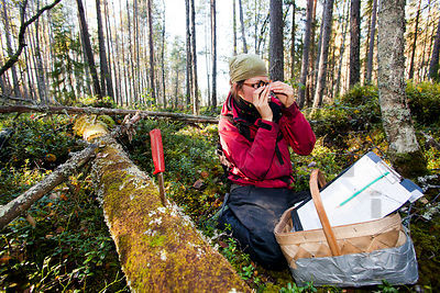 Inventory of the bracket fungi species in the old forest