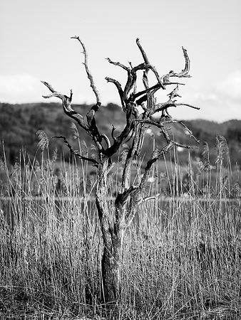 Dead tree on his own