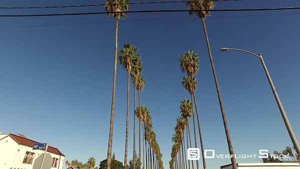 Palm Trees Double Line California