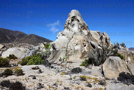 Eroded rock formations , Llanos de Challe National Park , Region III , Chile