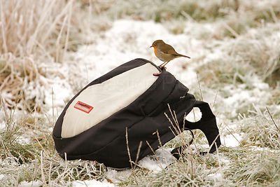 Robin Perches on a Ruksac Sitting on Snowy Grassland
