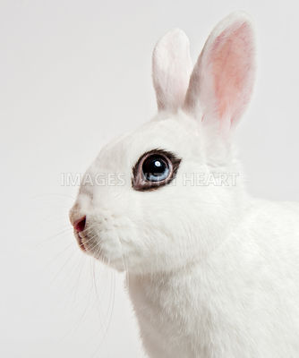 White bunny with eyeliner