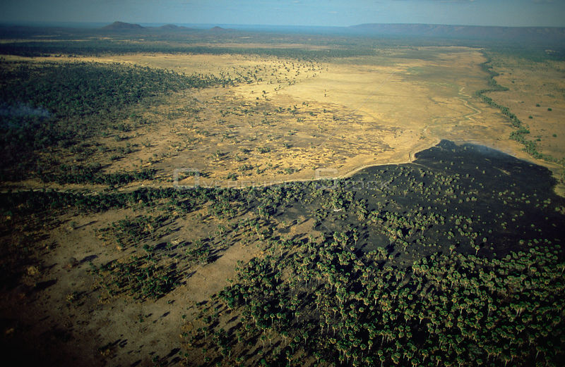 Aerial view of burnt woodland savanna during dry season, Katavi National Park, Tanzania
