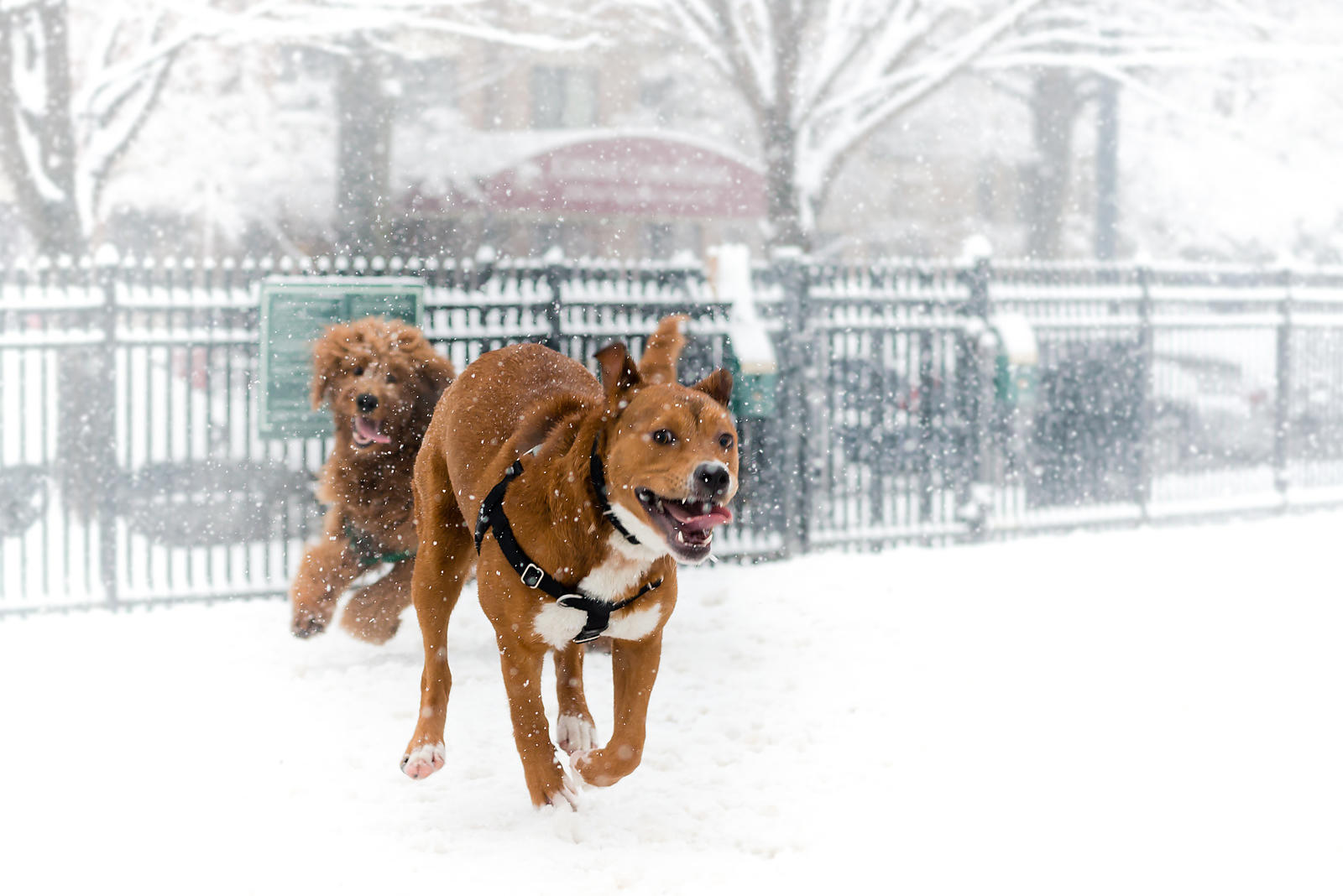CircleSnowDogs-20150305-068