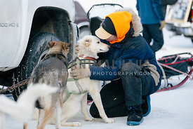 woman hugs alaskan husky after a winter dogsled race in the snow