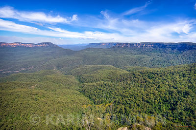 Blue Mountains forest