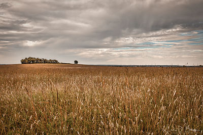 Wide Angle View of Tall Grass Prairie