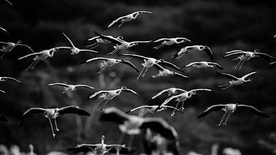 40406-Bird_Laurent_Baheux