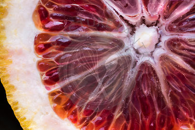 Blood orange detail