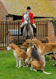 Huntsman John Holliday with his hounds - The Belvoir at Burton Pedwardine