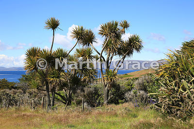 Lush established vegetation at Carcass Settlement, Carcass Island, Falkland Islands