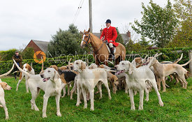Peter Collins with hounds at the meet - Quorn at Barrowcliffe 1-11-13