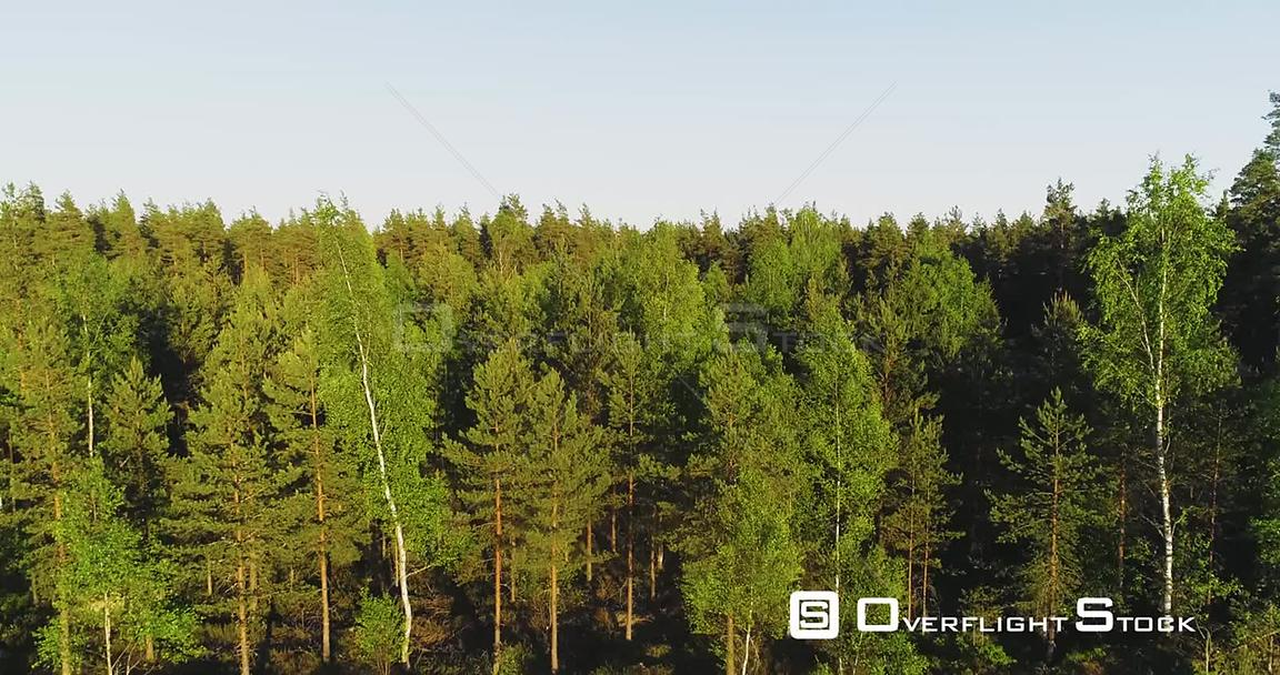 Spring Forest, Aerial, Rising, Drone Shot, Over Light Green Finnish Trees, Revealing a Road and Endless, Scandinavian, Green ...