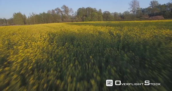 Low flyby over mustard field in bloom Washington State