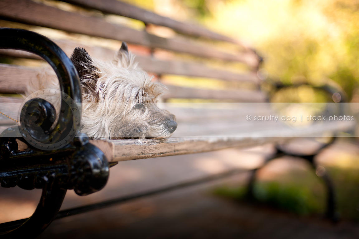 Magnificent Stock Photo Small Dog Lying Alone On Bench In Park With Frankydiablos Diy Chair Ideas Frankydiabloscom