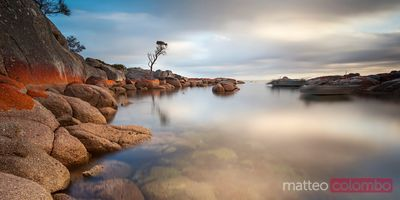 Solitary tree at sunrise Binalong bay Tasmania Australia