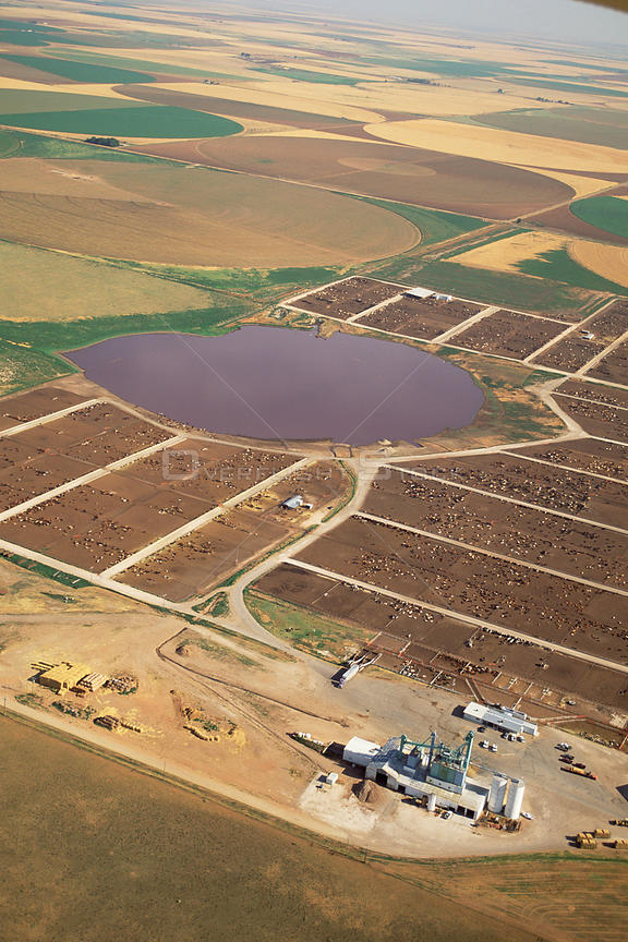 Intensive livestock rearing with playa lake polluted by manure, Texas, USA.