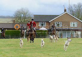 Hounds heading off from the meet - The Cottesmore Hunt at Castle Bytham