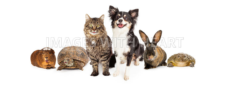 Happy and Smiling Group of Pets